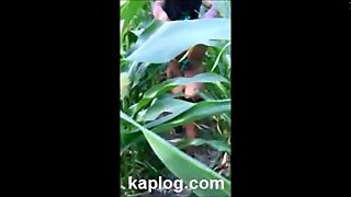Pinay Fucked In The Cornfield